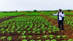 Türk tohumu Sudan'da üretilecek