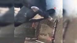 Kenya'da susayan inek, çeşmeyi açıp su içti