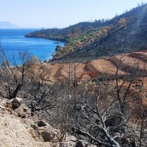 Milas'ta yanan ormanlık alanlara 'inşaat yapılıyor' iddiası yalan çıktı