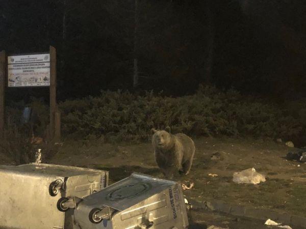 Uludağ'da aç kalan ayılar vatandaşa saldırdı