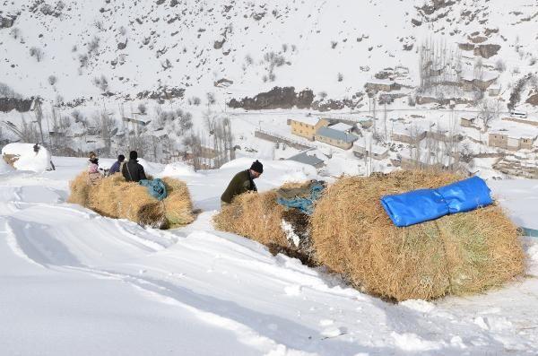 Terörden temizlenen dağlarda hayvancılık yapılıyor