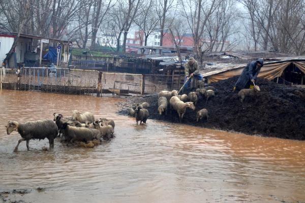 Su basan çiftlikte koyunlar telef oldu