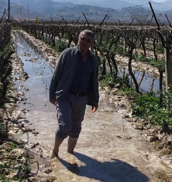Alaşehir'de üzüm bağını sıcak su bastı