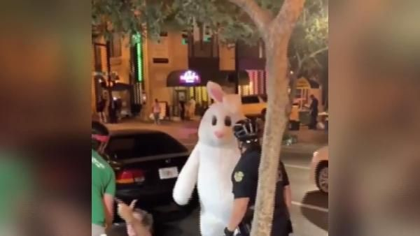 'Paskalya tavşanı' ayıramadığı kavgaya dahil oldu
