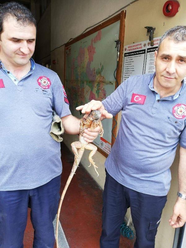 Düzce'de cami deposundan iguana çıktı