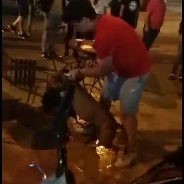 Aydın'da pitbullun  saldırdığı kedi ağır yaralandı