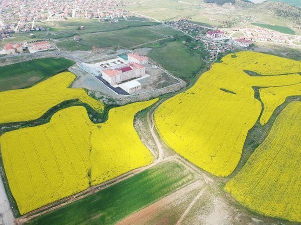 Trakya'da kanola ekimi artıyor