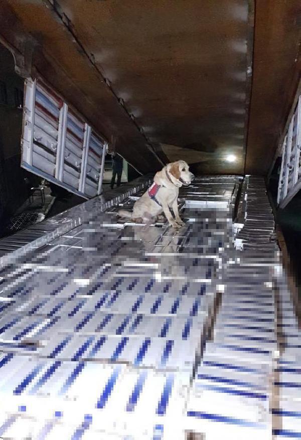 Hatay'da aranan tırda 42 bin paket kaçaksigara yakalandı