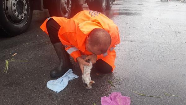Ölmek üzere olan yavru kediye suni teneffüs yapıldı