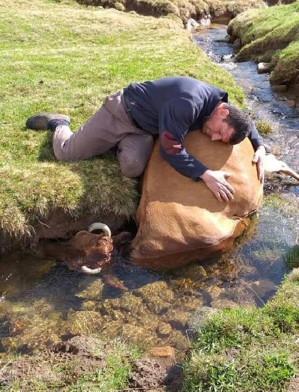 Rize'de ırmakta telef olan ineğine sarılıp ağladı