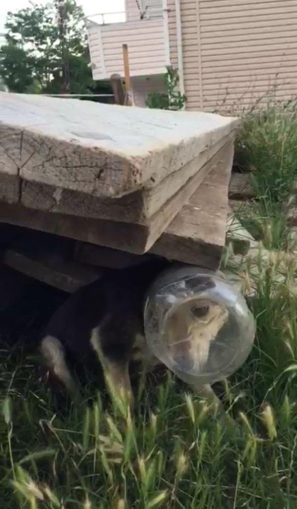 Kafası bidona sıkışan köpeği kurtardılar