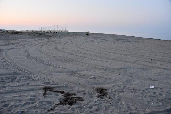 50 yuva olan caretta caretta kumsalı tarla gibi sürüldü