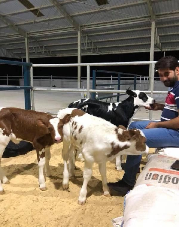 Aydın'da hayali ineklerden 10 milyonluk vurgun yaptı