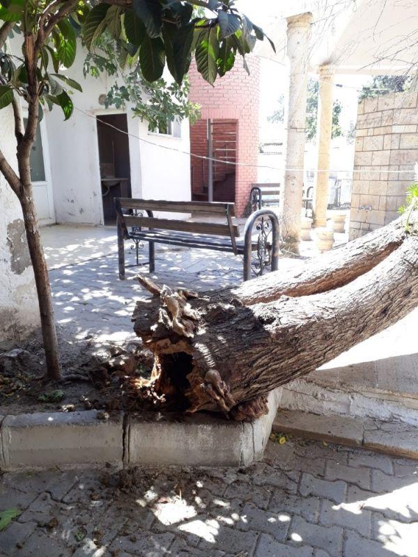 İzmir'de caminin üzerine ağaç devrildi