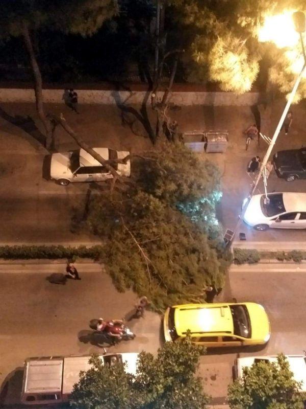 Aydın'da çam ağacı seyir halindeki aracın üstüne devrildi