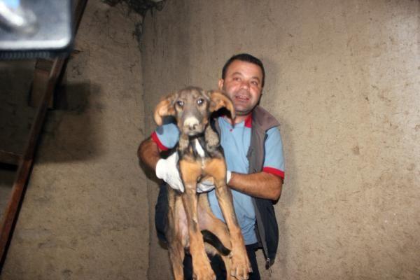 Zemin katta 10 gün mahsur kalan köpek kurtarıldı