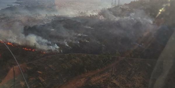 İzmir'de ağaçlandırılan erozyon sahasında yangın