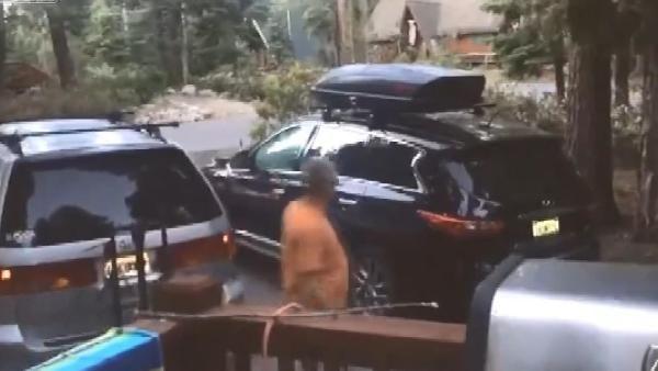 İçine hırsız girdiğini sandığı aracından ayı çıktı
