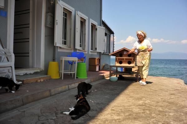 Bursa'da 70 yaşındaki teyzenin kedi düşkünlüğü