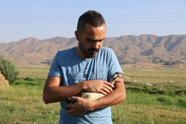 Hakkari'de yaralı balıkçıl, tedavi sonrası doğaya bırakıldı