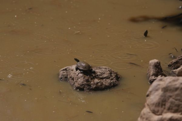 Bodrum'da susuz kalan kaplumbağalara can suyu