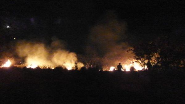 Burhaniye'de ot yangını mandalina bahçesini kül etti