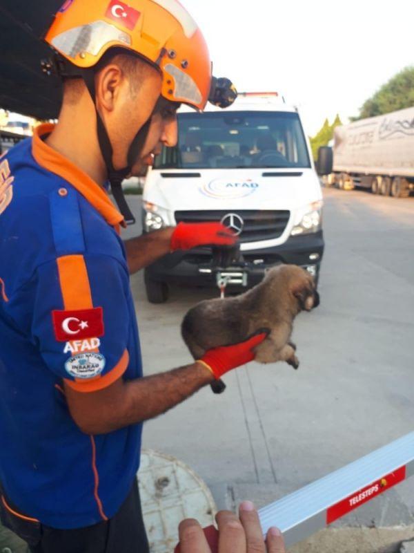Adana'da mahsur kalan köpekler kurtarıldı
