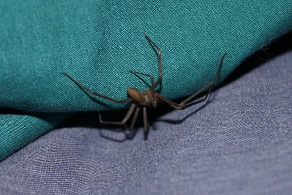 Kulağındakini su zannetti, örümcek çıktı