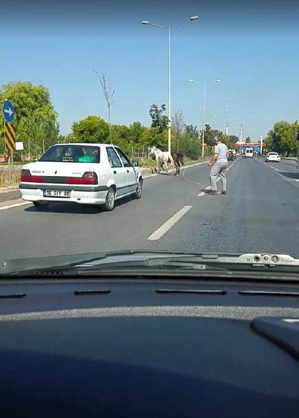 Eskişehir'de otomobilin çarptığı atlar telef oldu