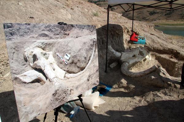 Kayseri'de 7,5 milyon yıllık dev fosil bulundu
