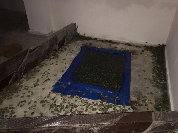Sınır kapısında 2 bin 500 kaplumbağa bulundu