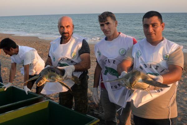 Tedavi edilen caretta carettalar yeniden denize kavuştu
