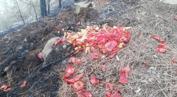 Bafra'da piknikçiler orman yangınına sebep oldu