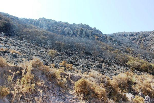 Turgutreis yangın sonrası görüntülendi