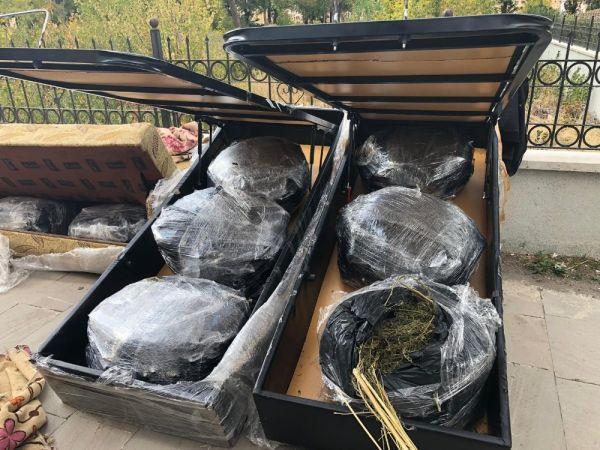 Kanepelerin içinde 105 kilogram esrar bulundu