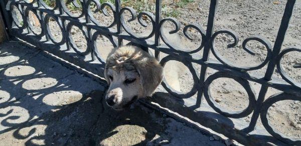 Sivas'ta kafası sıkışan yavru köpek kurtarıldı