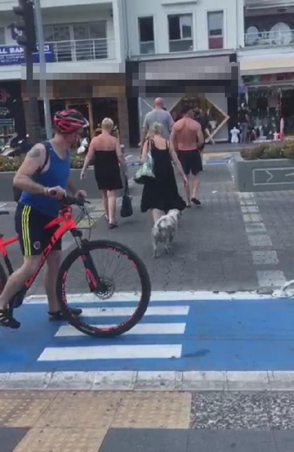 Marmaris'te köpek yeşil ışığı bekledi