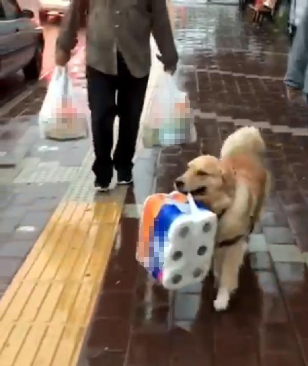 Çanakkale'de sahibine yardım eden köpek