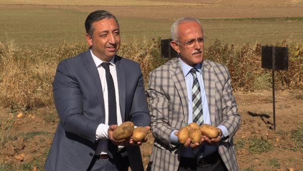 Yozgat'ta 6 çeşit yerli patates hasadı