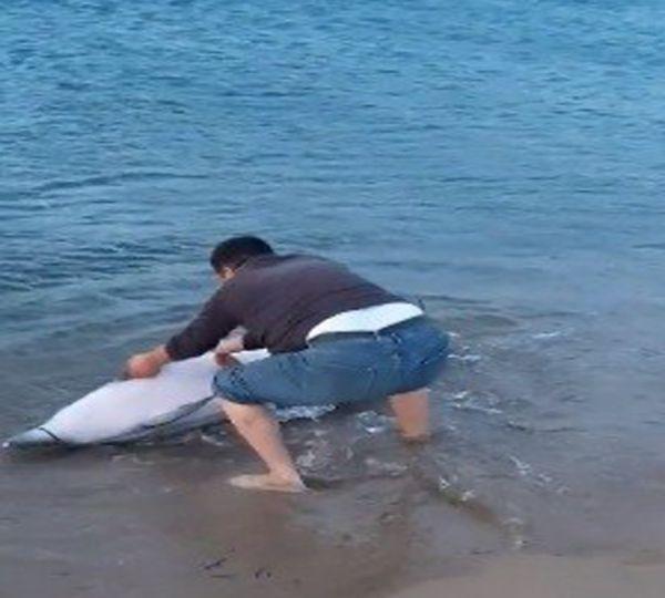 Sahile vuran yunus balığını kurtardı -1