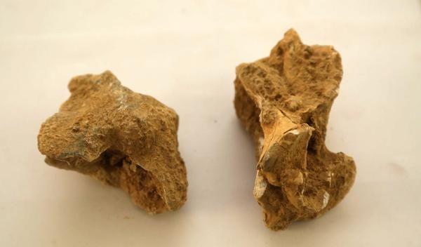Isparta'da, 7-8 milyon yıl öncesine ait omurgalı fosillerine ulaşıldı -1