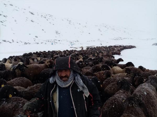 Karlıova'da mahsur kalan 2 bin 500 koyun kurtarıldı -1