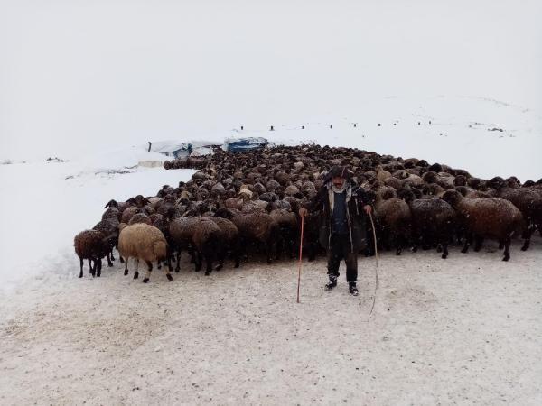 Karlıova'da mahsur kalan 2 bin 500 koyun kurtarıldı -2
