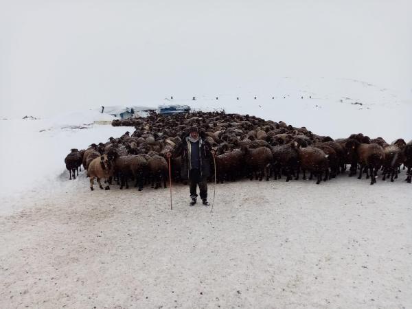 Karlıova'da mahsur kalan 2 bin 500 koyun kurtarıldı -5