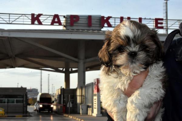 Kapıkule'de 14 yavru köpek ele geçirildi -7