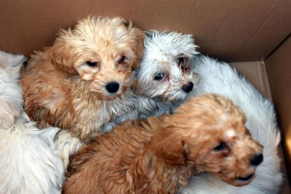 Kapıkule'de 14 yavru köpek ele geçirildi -10