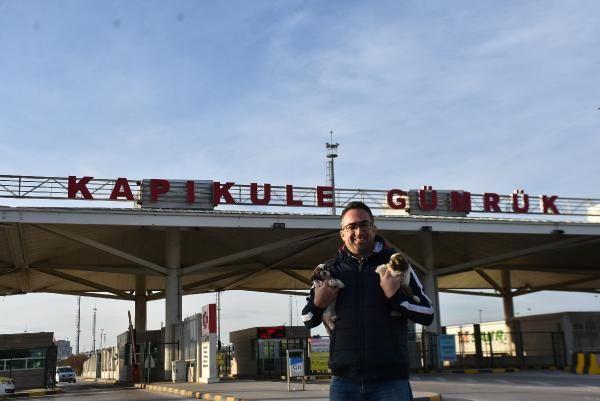 Kapıkule'de 14 yavru köpek ele geçirildi -3