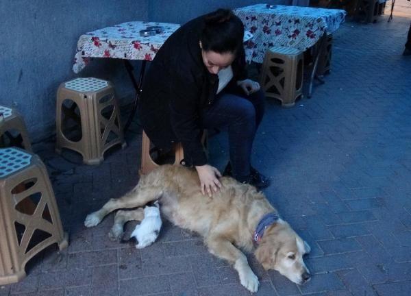 Annesinin dışladığı yavru kediyi, 'Tarçın' köpek sahiplendi -10