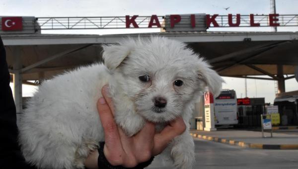 Kapıkule'de 14 yavru köpek ele geçirildi -8