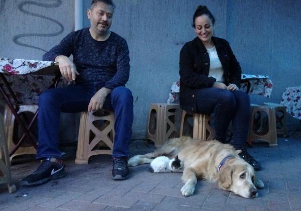 Annesinin dışladığı yavru kediyi, 'Tarçın' köpek sahiplendi -5